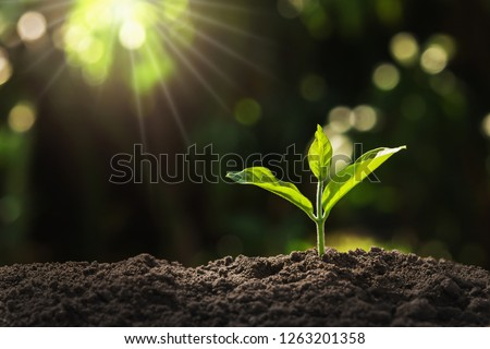 young plant growing in garden with sunlight Royalty-Free Stock Photo #1263201358