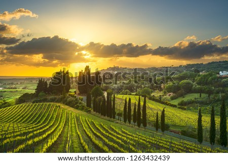 Casale Marittimo village, vineyards and countryside landscape in Maremma. Pisa Tuscany, Italy Europe. #1263432439