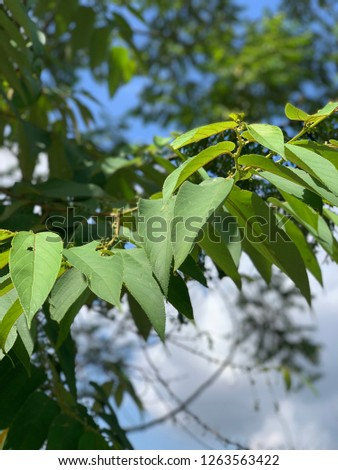Leaves branches nature #1263563422