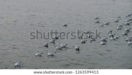 Group of seagulls floating on the sea. #1263599413