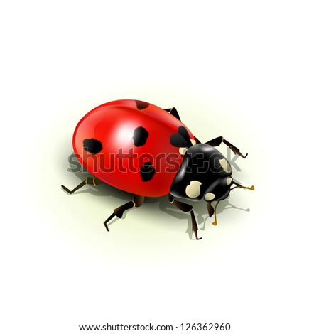 ladybug, isolated on white background #126362960