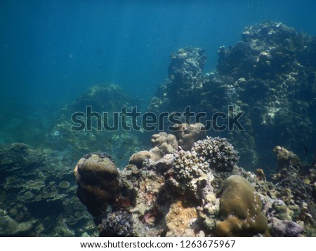 Colorful Trevally on a tropical coral reef    #1263675967