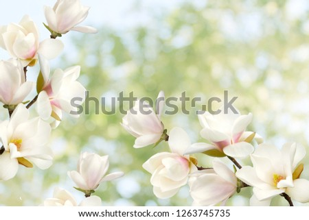 Beautiful blooming magnolia flower bouquet.