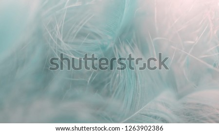 Blur Bird chickens feather texture for background, Fantasy, Abstract, soft color of art design. #1263902386