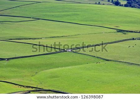 green fields #126398087