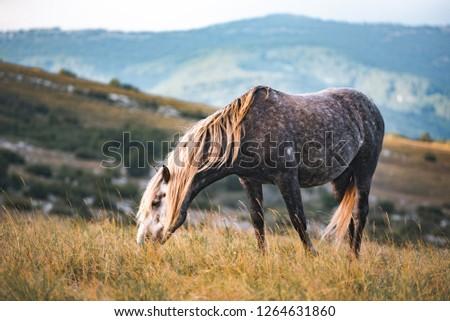 Wild Horses on Cincar Mountain in Bosnia and Herzegovina #1264631860