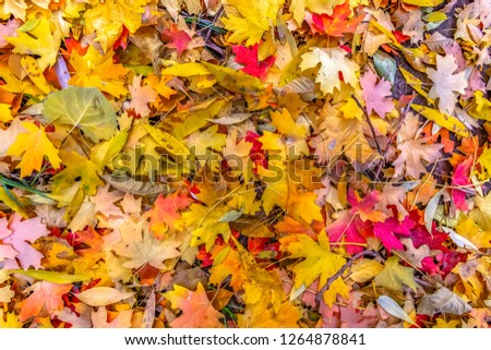 Autumn season with colorful fallen leaves in Utah #1264878841