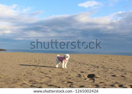a white dog in the beach #1265002426