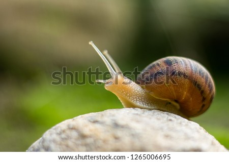 snail on rock reaching up  Royalty-Free Stock Photo #1265006695
