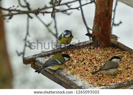 Bird titmouse feeding millet sunflower on fodder rack in winter snow #1265093503