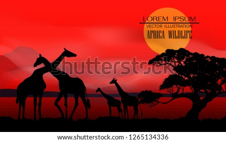 African Wildlife Background. Nature Background. African savanna landscape. safari card. vector. #1265134336