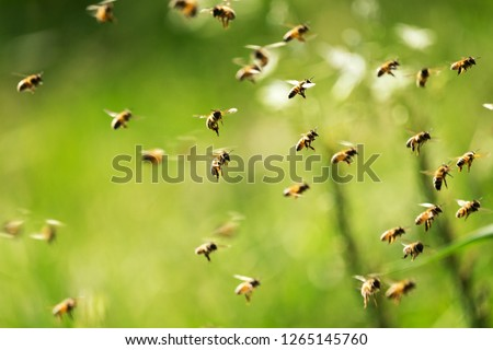 Swarm of bees in flight on a nice sunny day #1265145760
