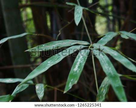 Green bamboo leaves #1265225341