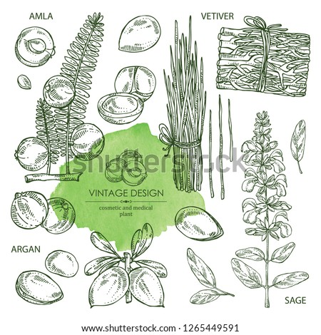 Collection of perfumery, cosmetics and medical plant: argan, sage, vetiver and amla. Vector hand drawn illustration #1265449591