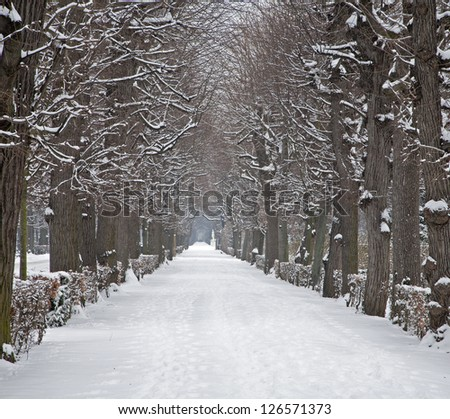 Vienna - live fence from gardens of Schonbrunn palace in winter #126571373