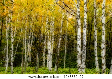 Yellow Autumn Forest #1265832427