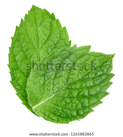 Mint leaves isolated on white. Mint Clipping Path #1265883865