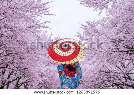 Asian woman wearing japanese traditional kimono and cherry blossom in spring, Japan.  Royalty-Free Stock Photo #1265891575
