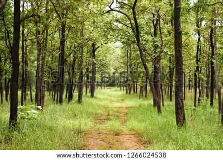 Beautiful nature tree scape, Bhopal, india #1266024538