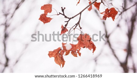 winter landscape with maple leaves #1266418969