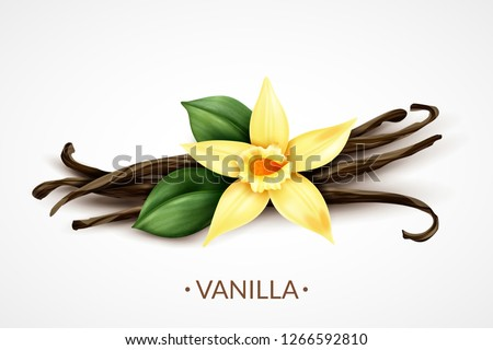 Sweet scented fresh vanilla flower with dried seed pods realistic composition of distinctive culinary flavoring vector illustration #1266592810