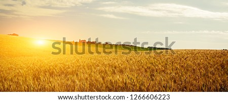Wheat crop field Sunset Landscape  #1266606223
