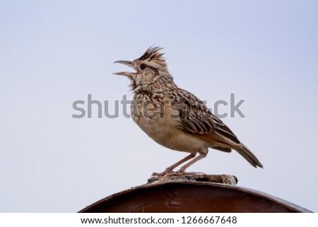 Bird in Massai Mara #1266667648