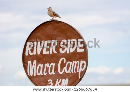 Bird in Massai Mara #1266667654