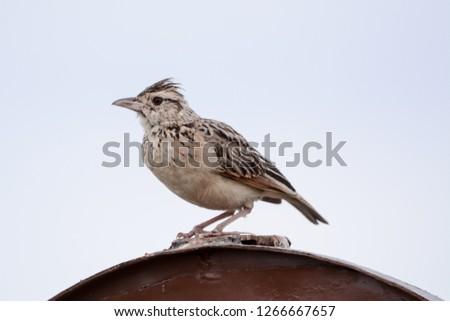 Bird in Massai Mara #1266667657