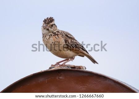 Bird in Massai Mara #1266667660