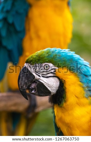 Blue and yellow macaw #1267063750