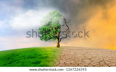 dry land tree climate change #1267226593