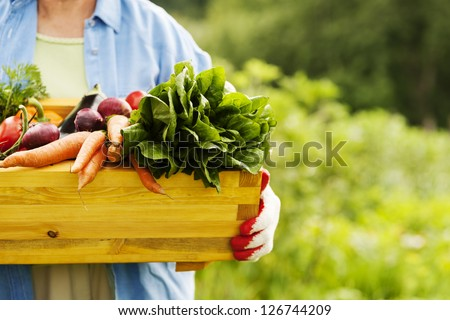 Senior woman holding box with vegetables Royalty-Free Stock Photo #126744209