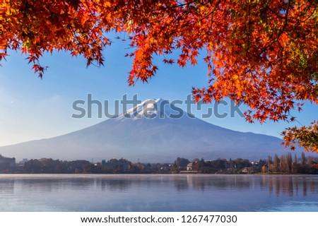 Mount Fuji or Fuji mountain in Autumn at Lake Kawaguchiko,Fujiyoshida,Yamanashi,Japan,Fujisan located on Honshu Island, is the highest mountain in Japan. #1267477030