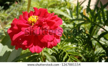 Different flowers with different colors and different shapes..we can use them for pc background #1267881154