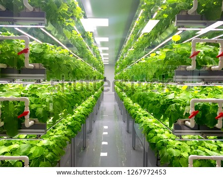 Plant vertical farms producing plant vaccines #1267972453