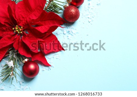Flat lay composition with poinsettia and space for text on color background. Traditional Christmas flower #1268016733