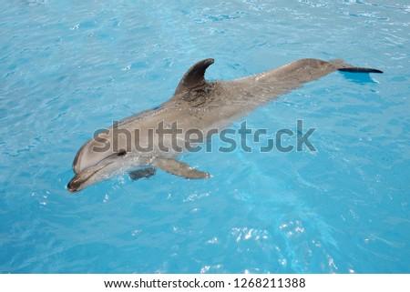 dolphins portreit and swim #1268211388