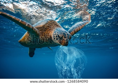 Water Environmental Pollution Problem Underwater animal Sea turtle eating Plastic  #1268584090