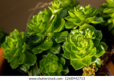 Succulents in a terracotta pot #1268942713