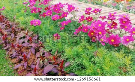Flowers in the garden #1269156661