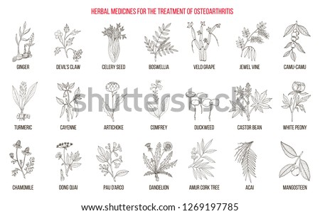 Best herbal remedies for osteoarthritis. Hand drawn botanical vector illustration #1269197785