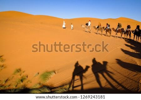 Dromedary ride in the Sahara desert #1269243181