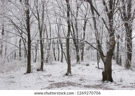 Forest in winter #1269270706