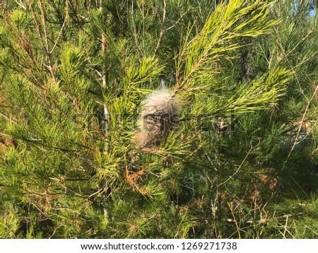 The pine at garden #1269271738