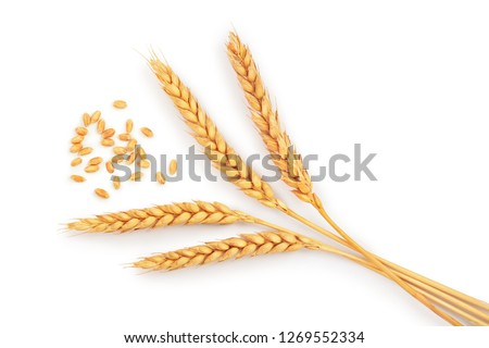 grain and ears of wheat isolated on white background. Top view #1269552334