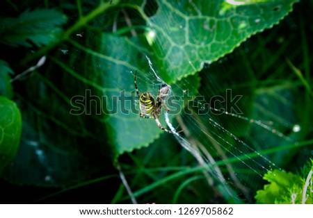 Yellow Spider on Web. #1269705862