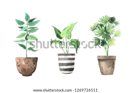 Watercolor hand painted house green plants in flower pots. Set of floral elemnts isolated on white. Decorative greenery collection perfect for print, poster, card making and scrapbooking design #1269726511