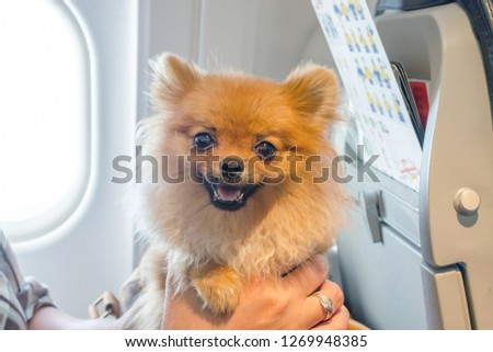 small dog pomaranian spitz in a travel bag on board of plane, selective focus #1269948385