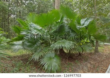 palm leaf #126997703